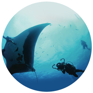 PADI Project Aware Specialist